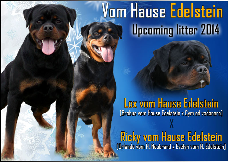 upcoming litter of Lex vom Hause Edelstein and Ricky vom Hause Edelstein