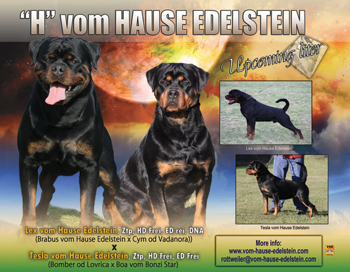 "Upcoming litter / ""H"" vom Hause Edelstein"