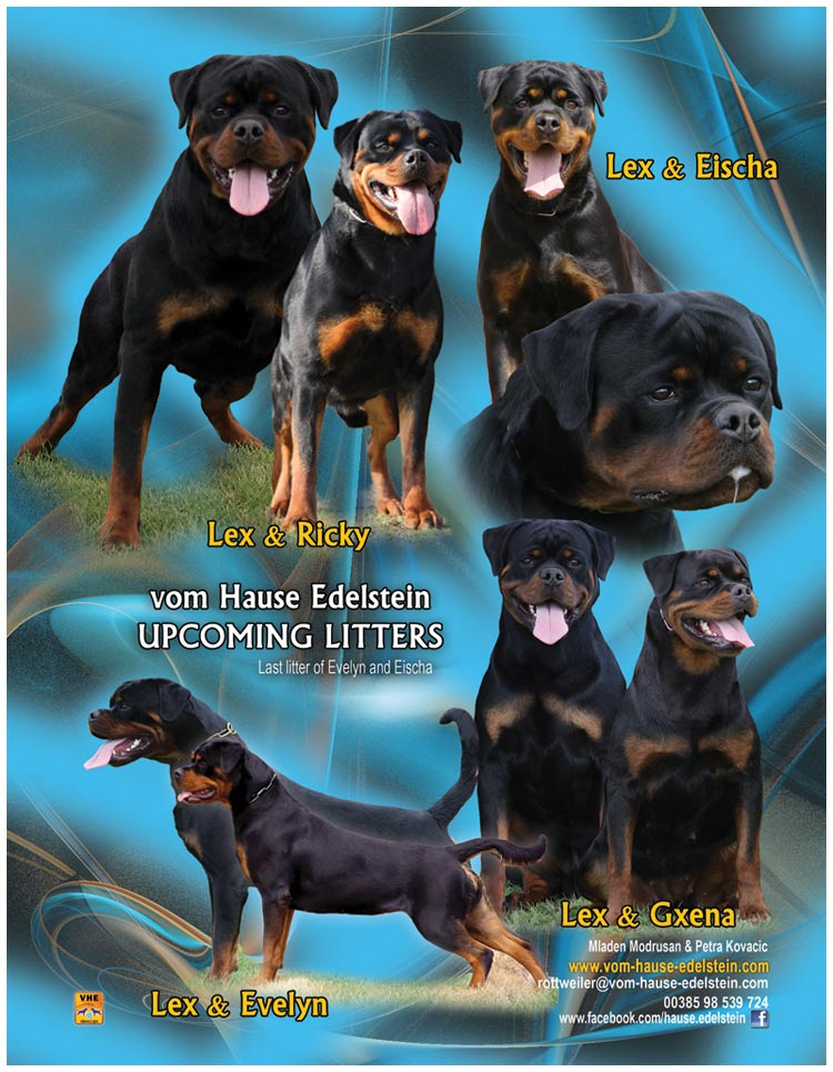 Upcoming litters in February 2014